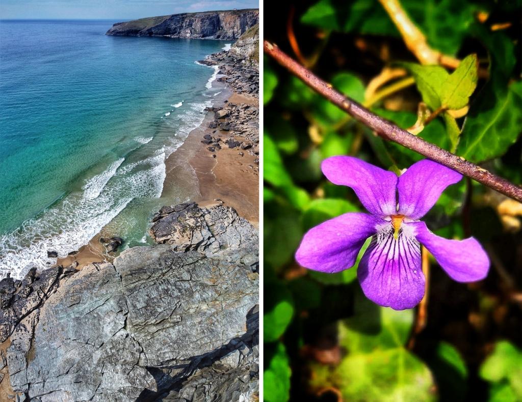 beach-flower-Daniel-Kavanagh