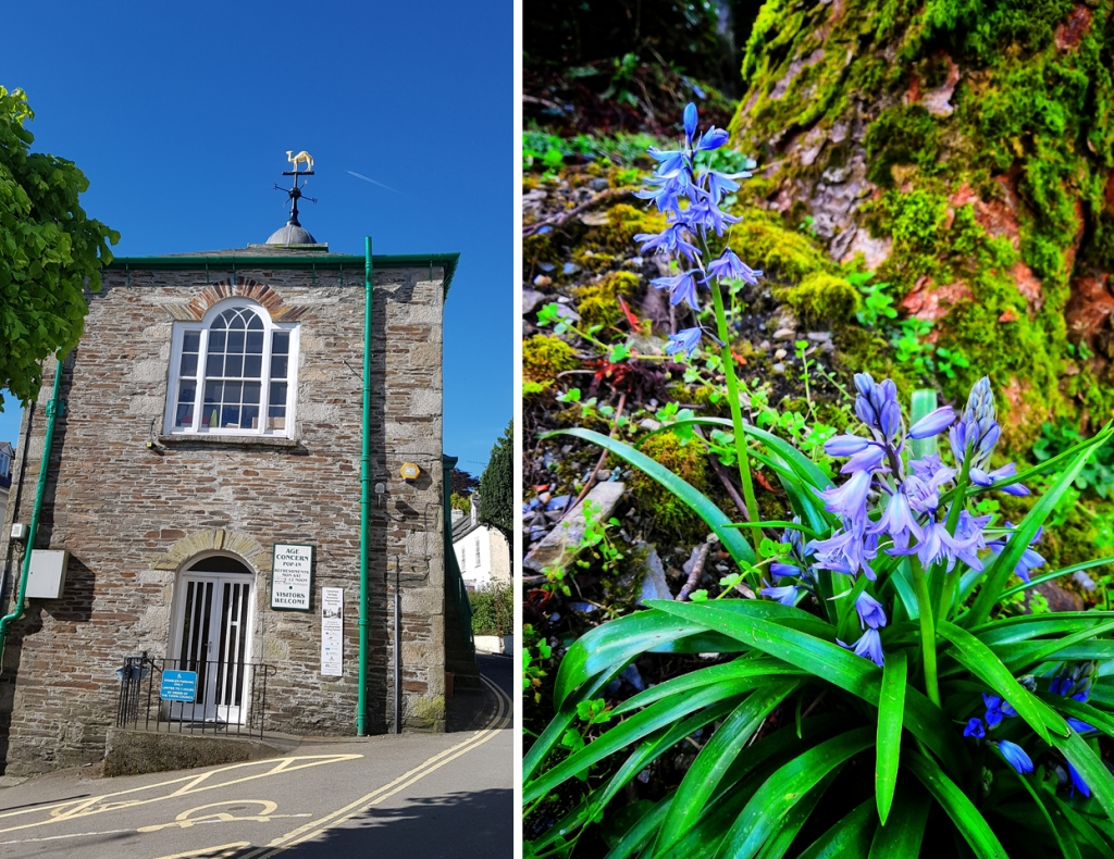 town-hall-bluebells
