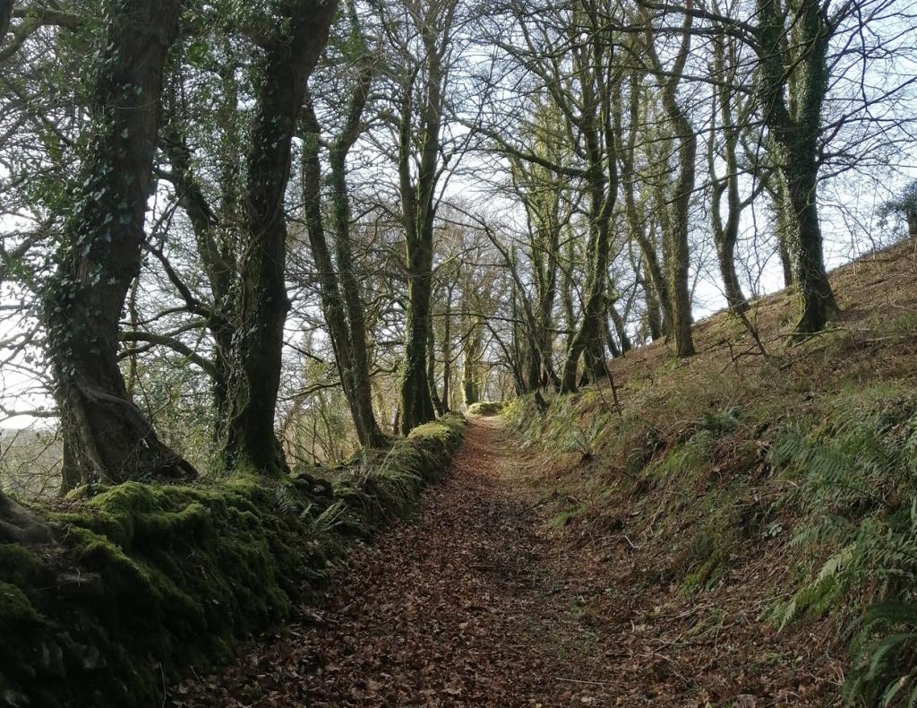 woodland-walk-camelford-Daniel Kavanagh