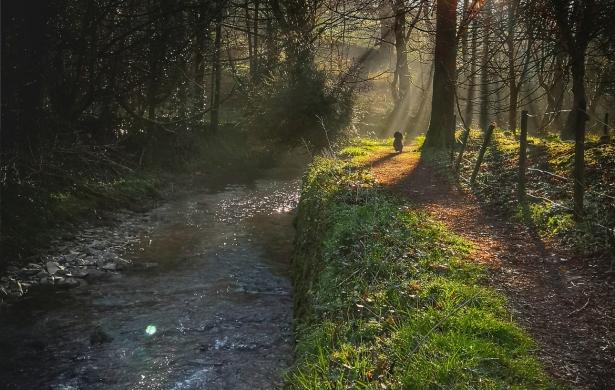 Walks in Camelford